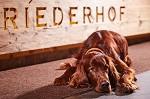 6. Platz beim hundehotel.info Award 2020: Hotel Riederhof