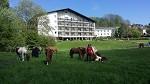 28. Platz beim hundehotel.info Award 2020: Reitzentrum Hausruckhof